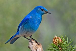 Mountain Bluebird Trails Annual Conference @ Kalispell   Montana   United States